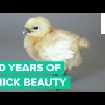 100 Years of Chick Beauty in 60 Seconds