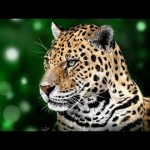 Jaguar – Speed Painting (#ArtRage) | CreativeStation