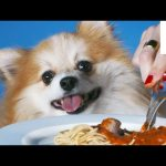 Dogs Eating With Their Humans is Pretty Damn Cute
