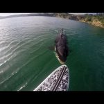 GoPro Awards: Orca vs. Paddle Board