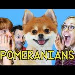 Pomeranians React to REACT Videos