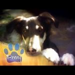 CBS Cares – Charles Osgood on Pet Adoption